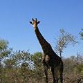 2003_Suedafrika